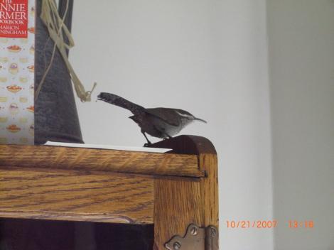 birdinhouse.jpg