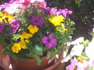 egghidinginflowers
